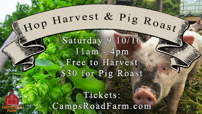 hop harvest pig roast