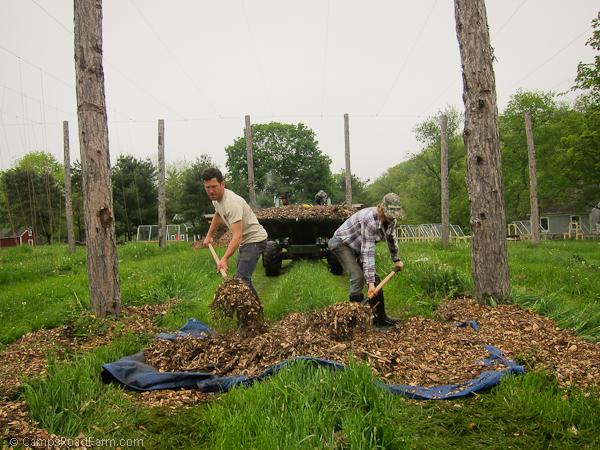 mulching hops