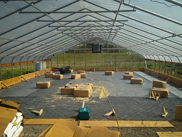 chicken in green house